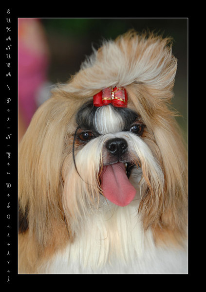 EUKANUBA / Pet-N-You Dog Carnival