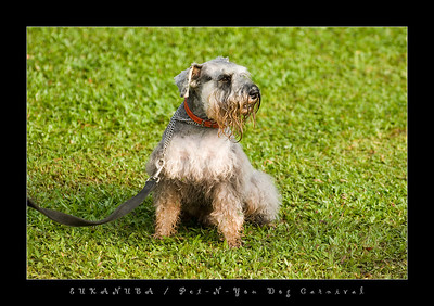 Eukanuba Pet-N-You Dog Carnival
